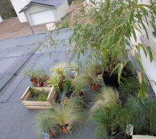 Graminees, genets et quelques sedums en attente de pouvoir etre plantes! d'abord, on doit niveler le terrain et desherber!