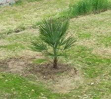 le palmier de plus pret