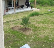 un petit palmier 65 pour briser un peu la vue de la baie vitre du voisin pour lui comme pour nous