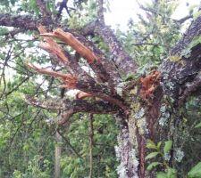 suite au travaux de terrassement l ouvrier nous a decaniller 2 arbres dont le pommier qui a ete enleve totalement l abricotier lui a pu etre garde mais au prix de quelques coups de pelleteuses