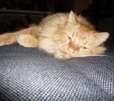 Le déménagement est difficile pour le chat ...