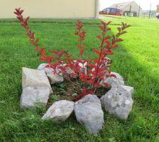 lilas des indes aux couleurs d automne