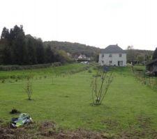 Haie vue du fond du terrain, les trois arbres au 2ème plan sont des noisetiers de coutard qui ont perdus leurs feuilles.Au 1er plan on aperçoit le jeune liquidambar.
