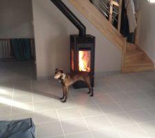La chienne de mon frérot n'a pas quitté le poêle pendant les flambées, toujours les fesses au chaud !