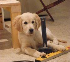 une aide canine non negligeable pour garder le matos