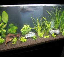 Remise en place de l\\\'aquarium: étape 2: les plantes
