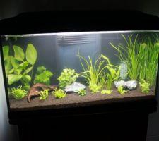 Remise en place de l\'aquarium: étape 2: les plantes