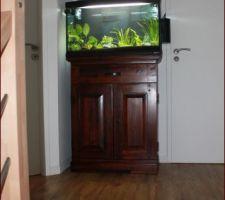 Remise en place de l'aquarium: étape 2: les plantes