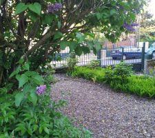 juste a droite du portail un parterre de muguets debut juin