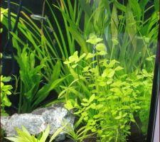 Aquarium au bout de 15 jours