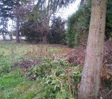 voilà notre terrain !! <br /> Y a du boulot pour enlever les arbres et débroussailler ....
