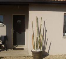 tiges de bambou en pot