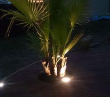 Palmier inséré dans la terrasse avec spot lumineux
