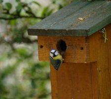 Le nid est occupé